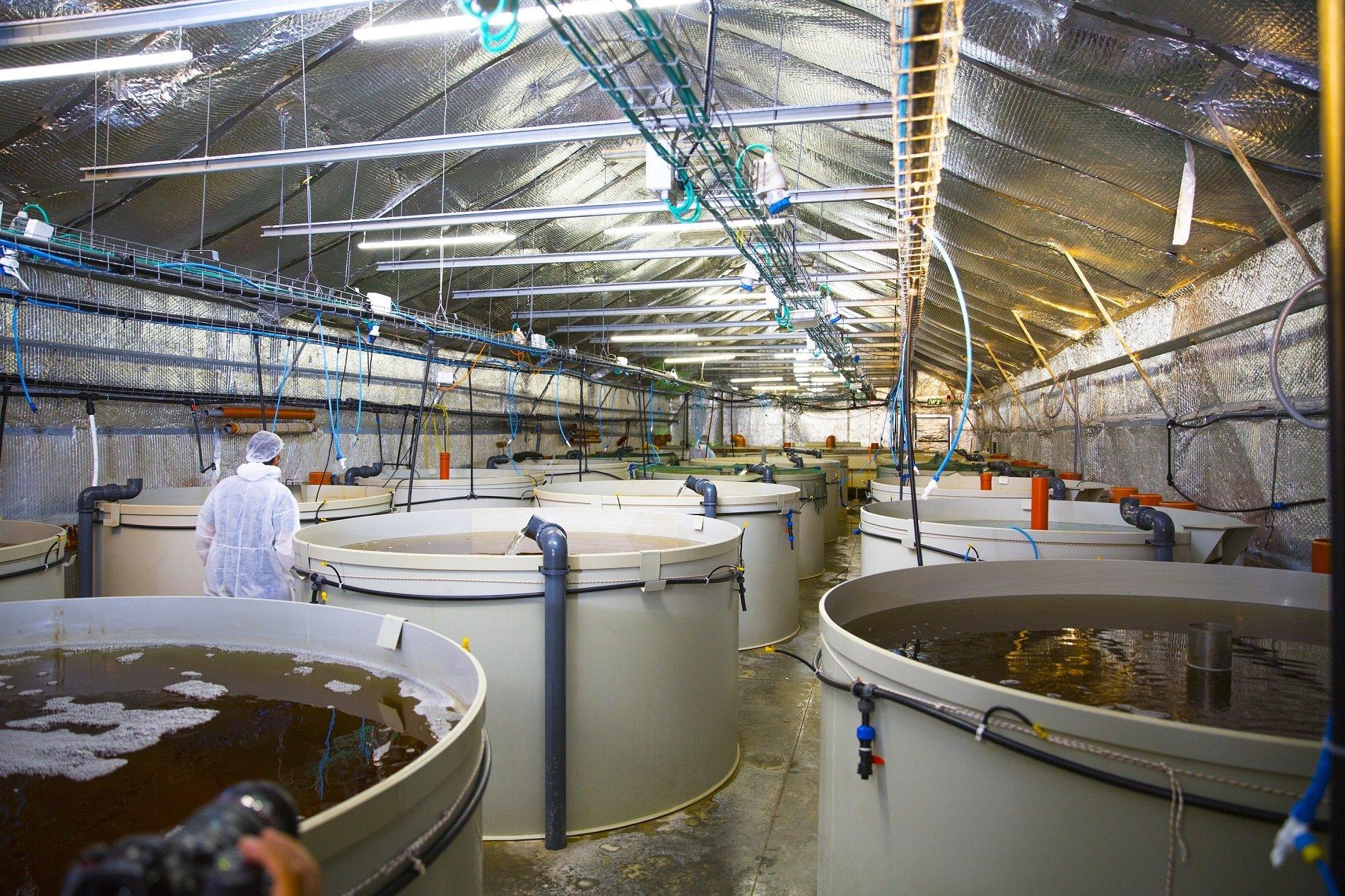 Shrimp tanks