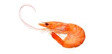 Whiteleg Shrimp